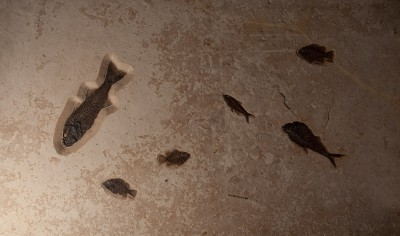 7RecFossilFishPlaque-H74xW112xD6jpg