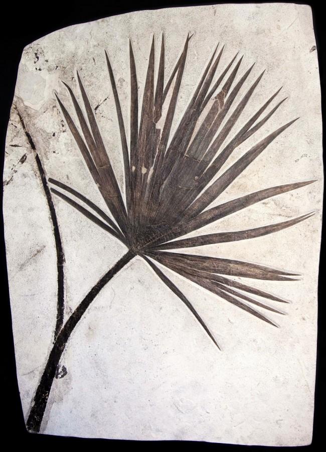 palm pimlico