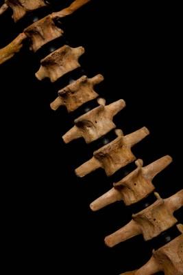 bear2bones