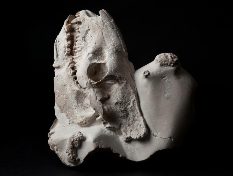 Oreodont H25 W21 D15