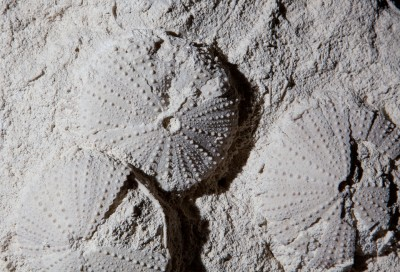 Sea Urchin.2 H31cm x W37cm x D10cm £2,200