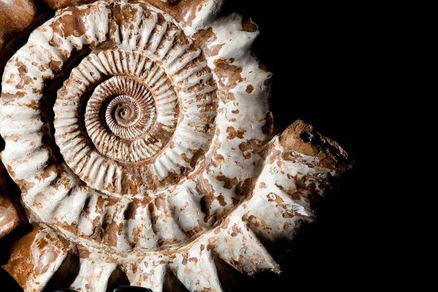 Ammonite Madagascar1 H56cm W 58cm D 18cm £6000