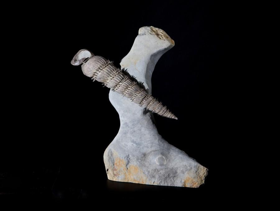Ammonite2 H40 W33 D16 £9,500