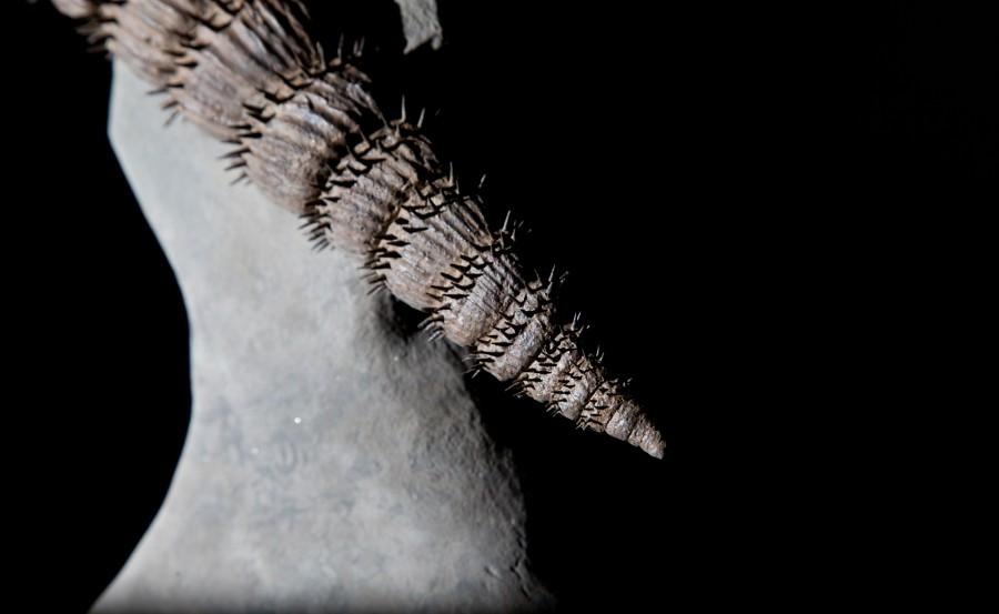 Ammonite2.2 H40 W33 D16 £9,500