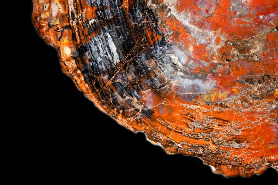 Fossil Wood Slice1.2 Di 90cm D3cm 14,000.