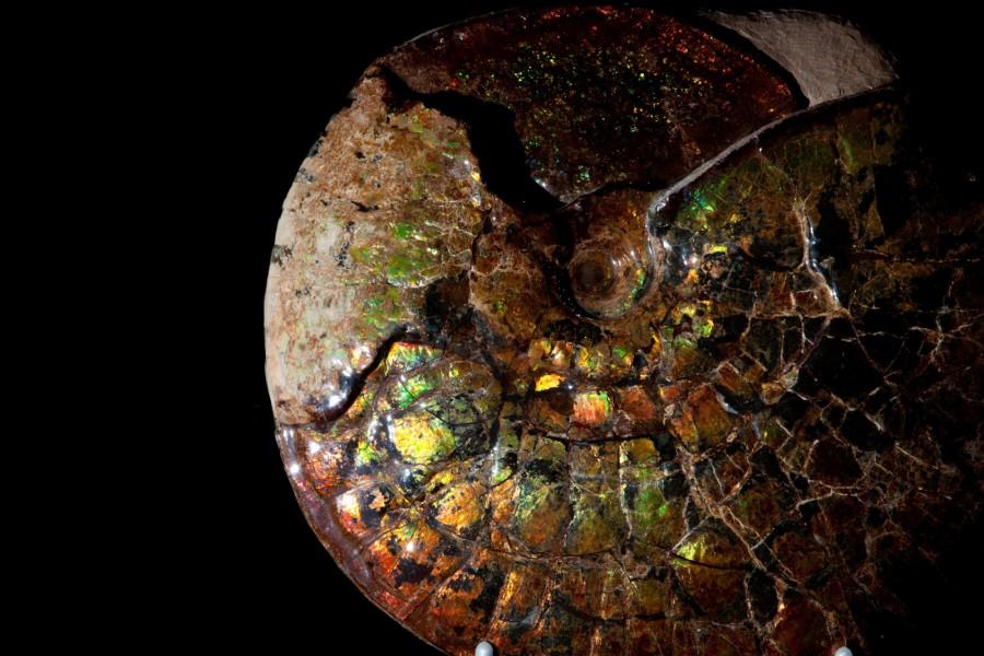Irr Ammonite.2 H32 W39 D12 £18,000