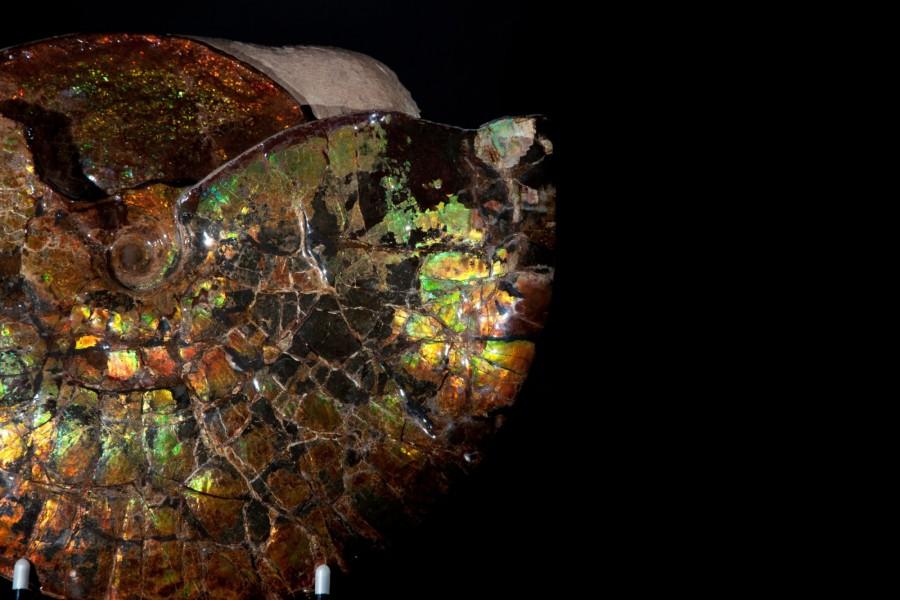 Irr Ammonite.3 H32 W39 D12 £18,000