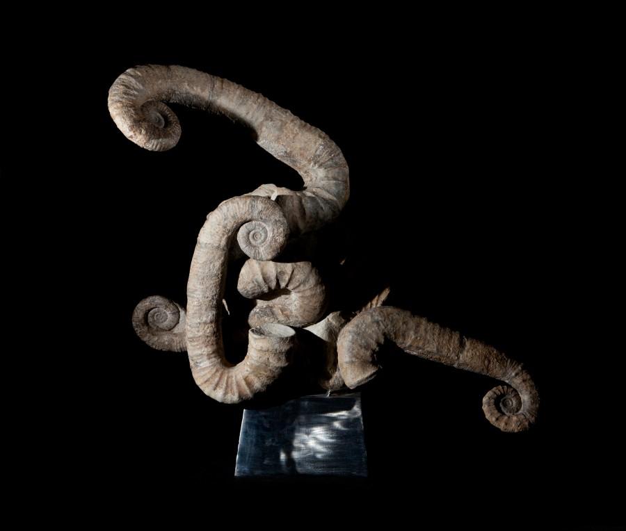 LO RES Ammonite H 76cm W 80cm D 30 cm £16,000