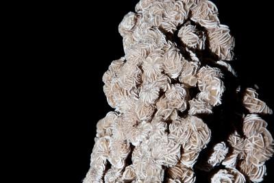 LO RESOLUDesert Rose.4 H56 W43 D30 £2,800