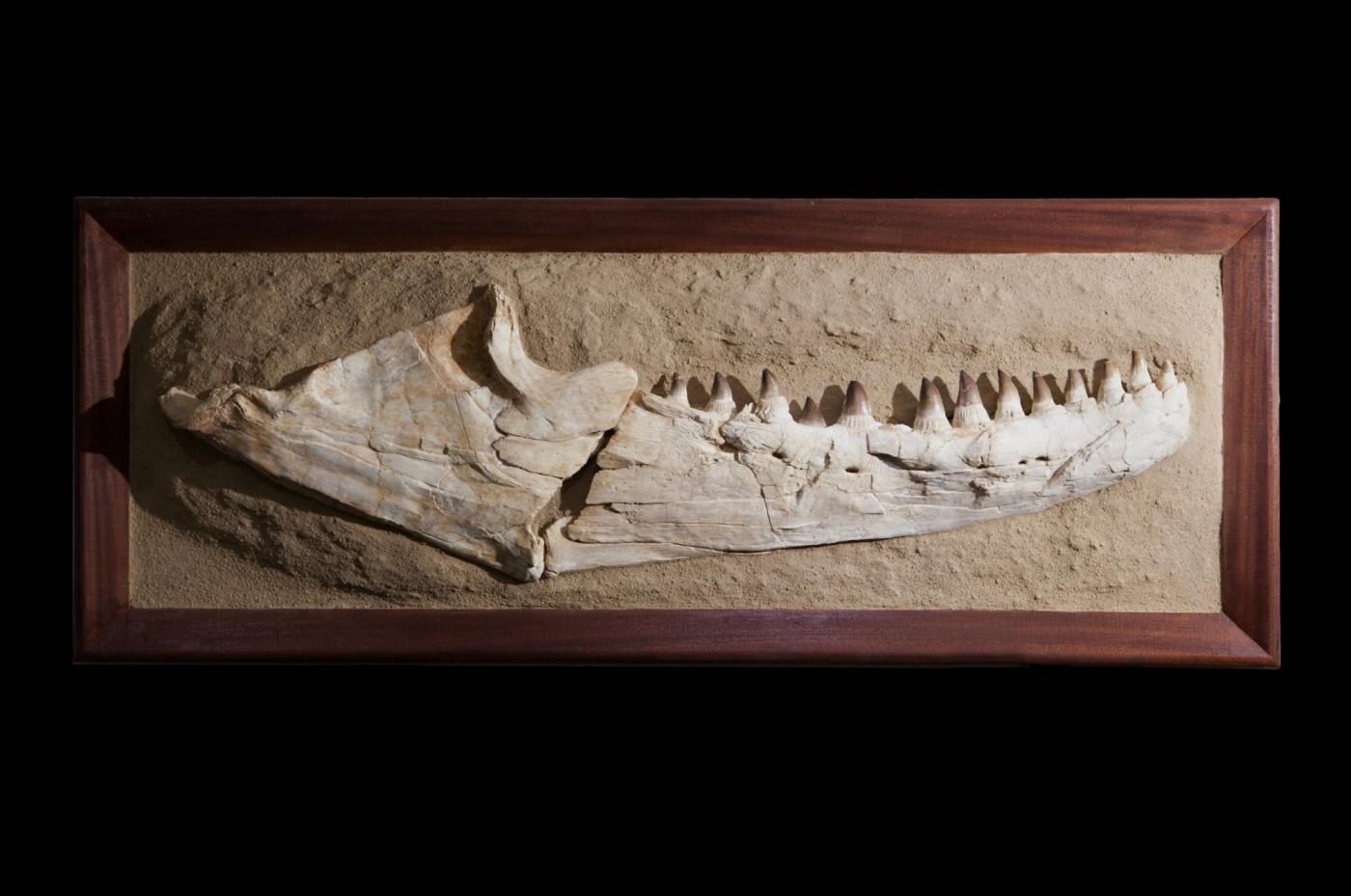 Mosasaur1.1