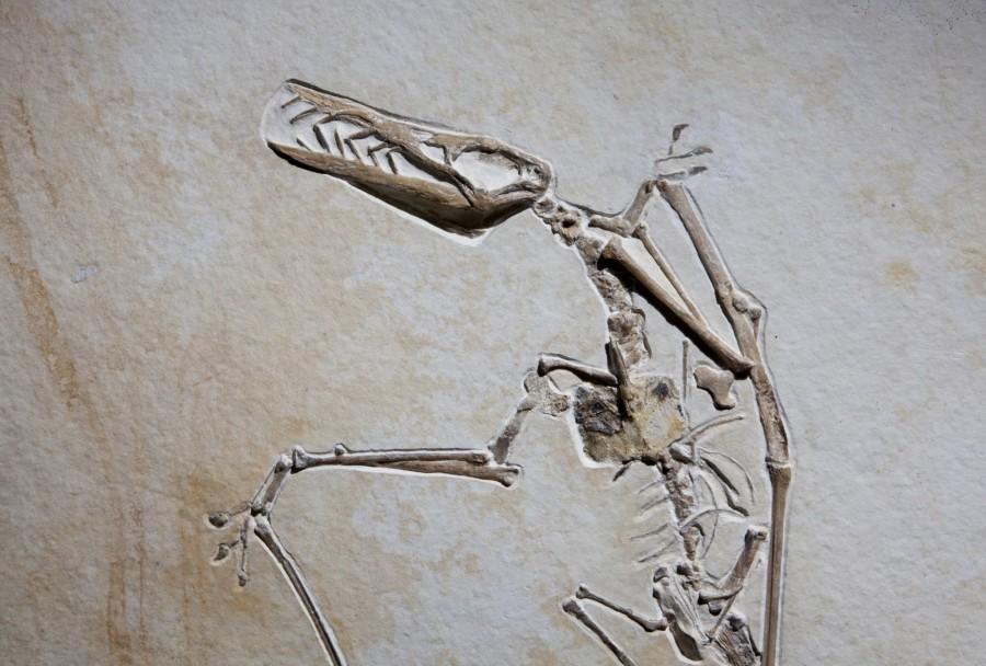 Reptile.2 H77cm W57cm D1cm