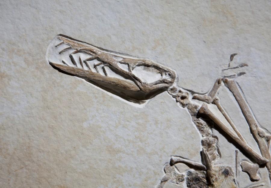 Reptile.5 H77cm W57cm D1cm