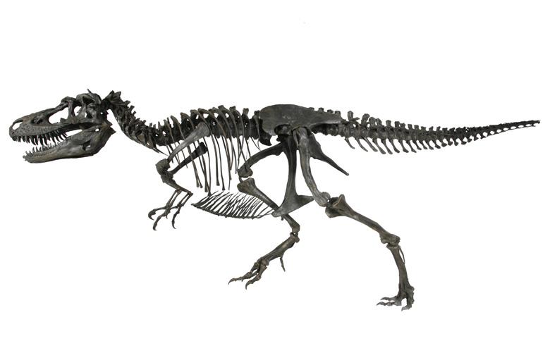 gorgosaurus-2
