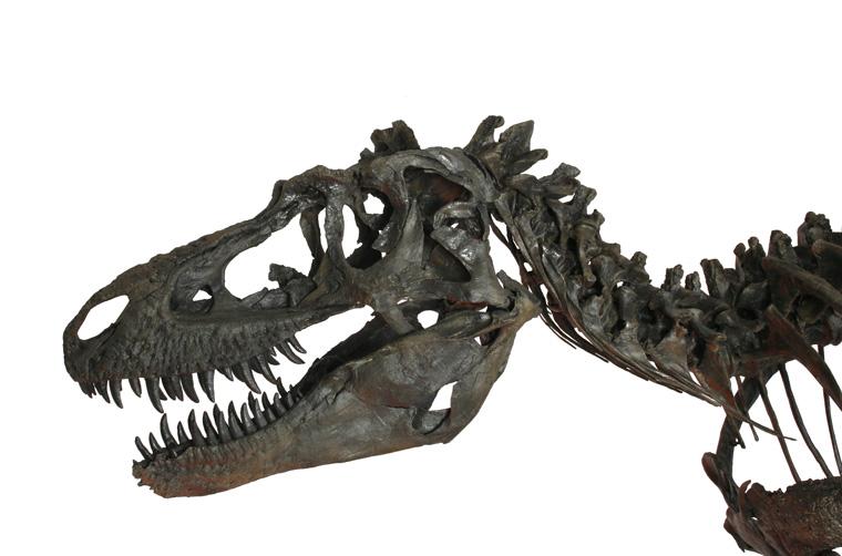 gorgosaurus-3