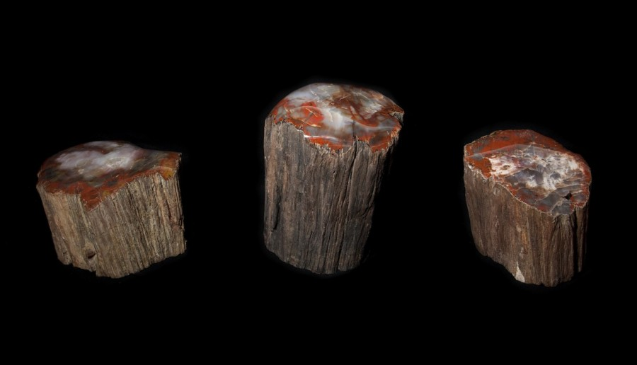 fossil wood logs