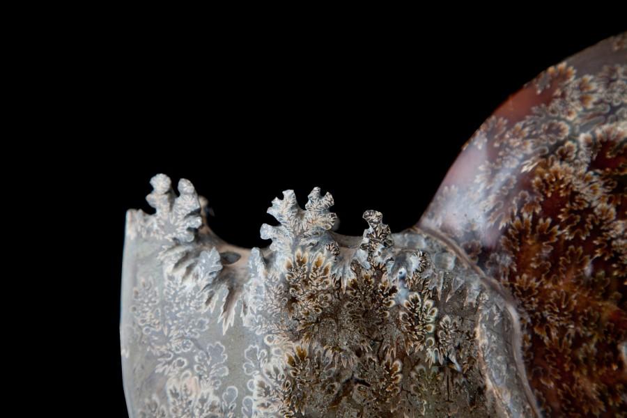 1. Ammonite 4