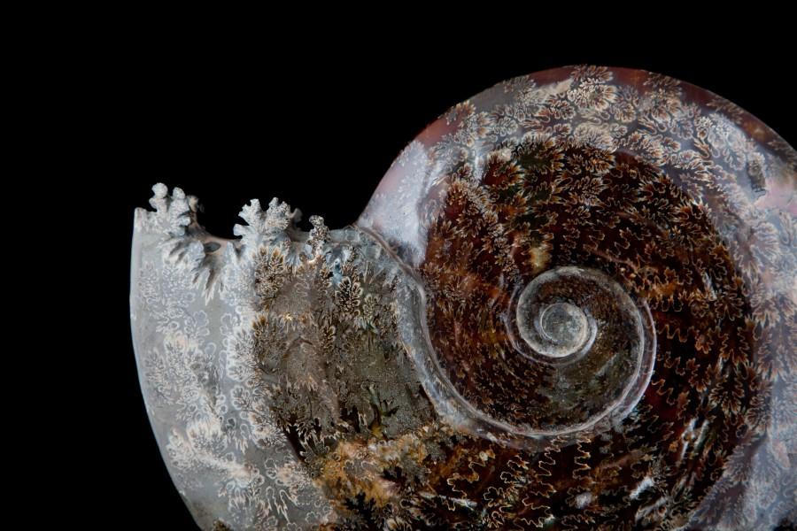 1. Ammonite2