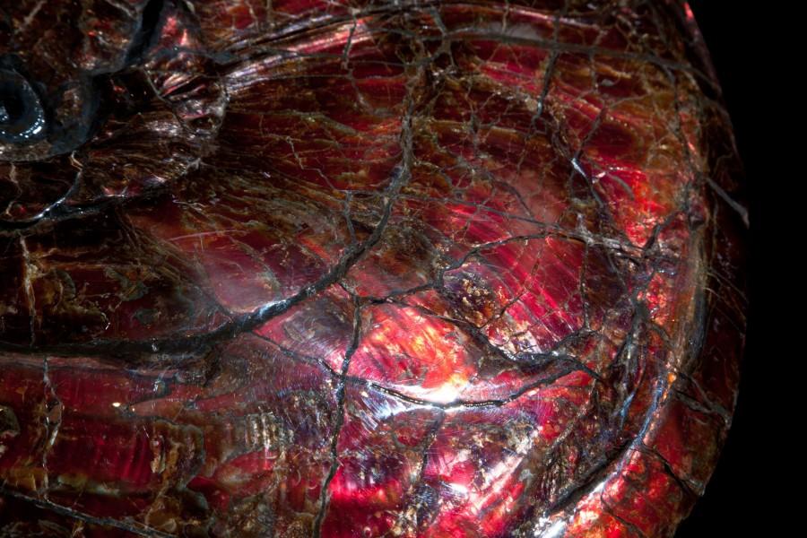 27. Canadian ammonite 2