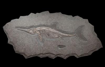 35. Ichtiosaur 1