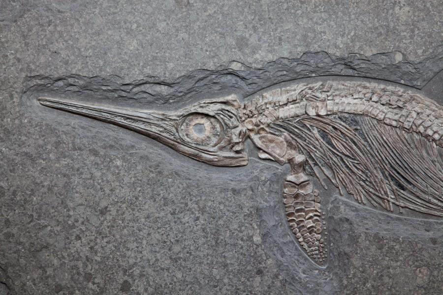 35. Ichtiosaur 3