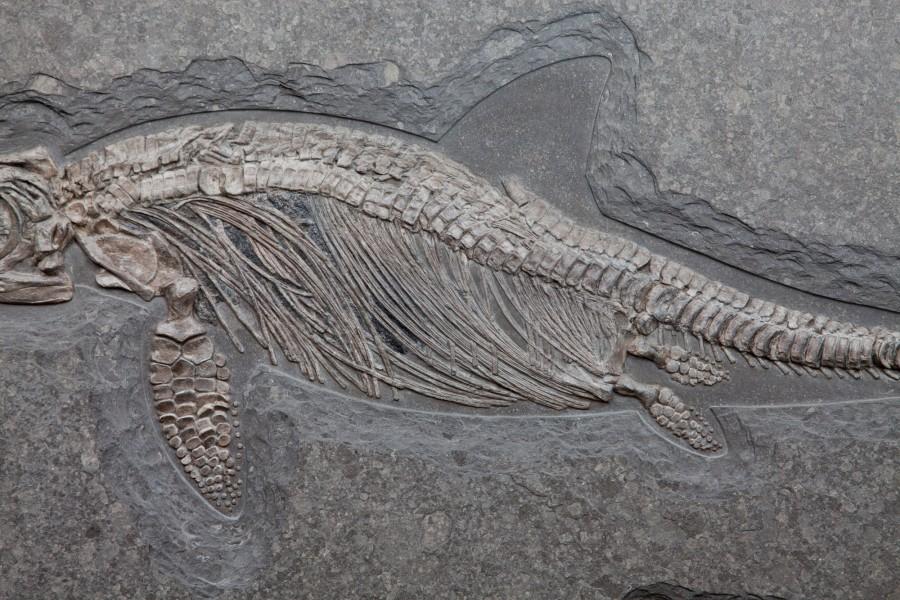 35. Ichtiosaur 4