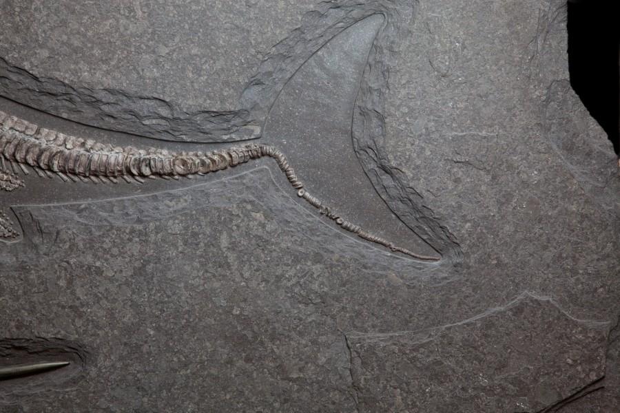 35. Ichtiosaur 5