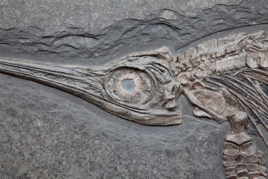 35. Ichtiosaur 6