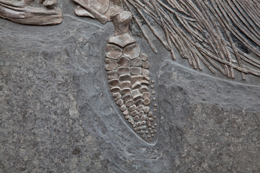 35. Ichtiosaur 7