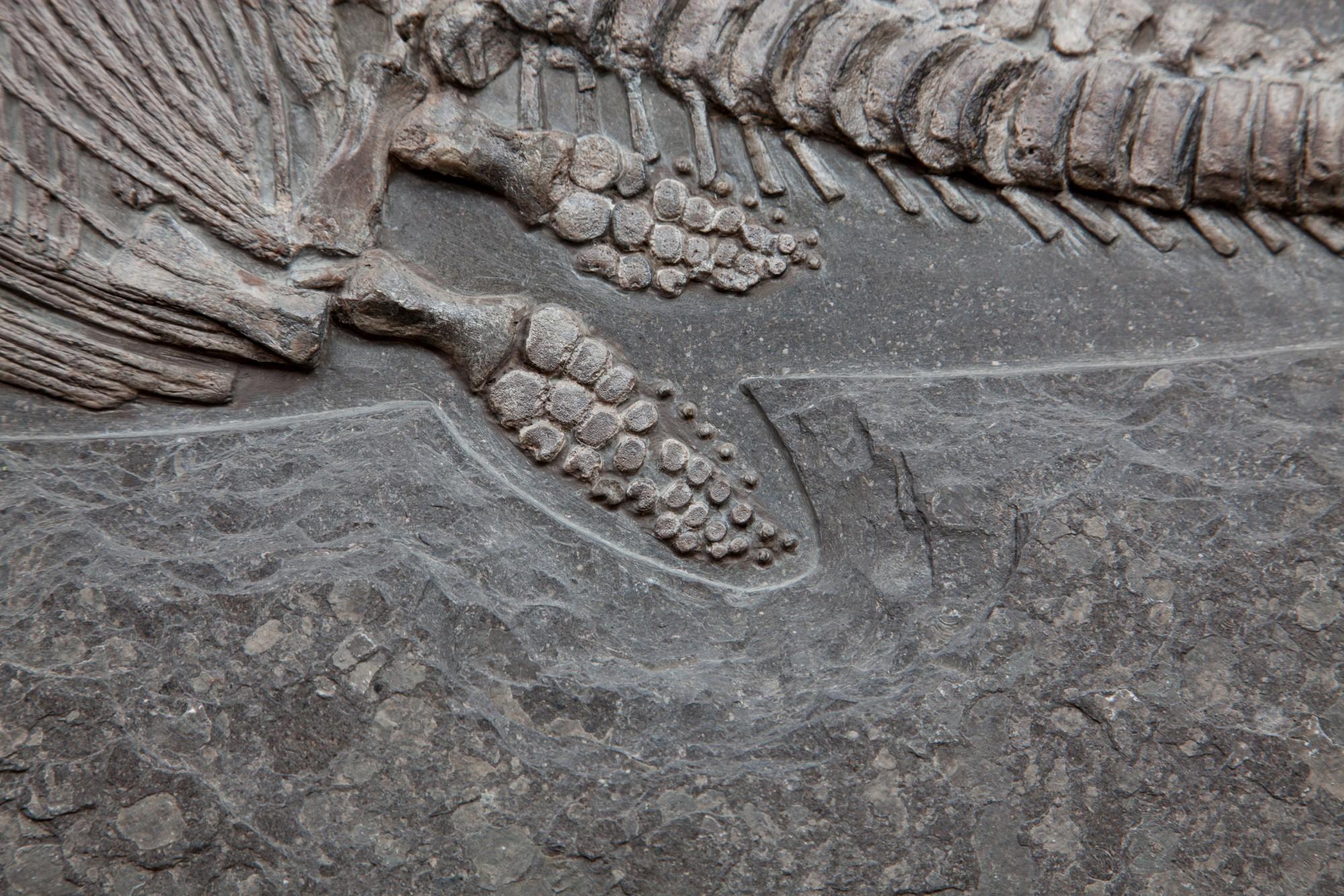 35. Ichtiosaur 8