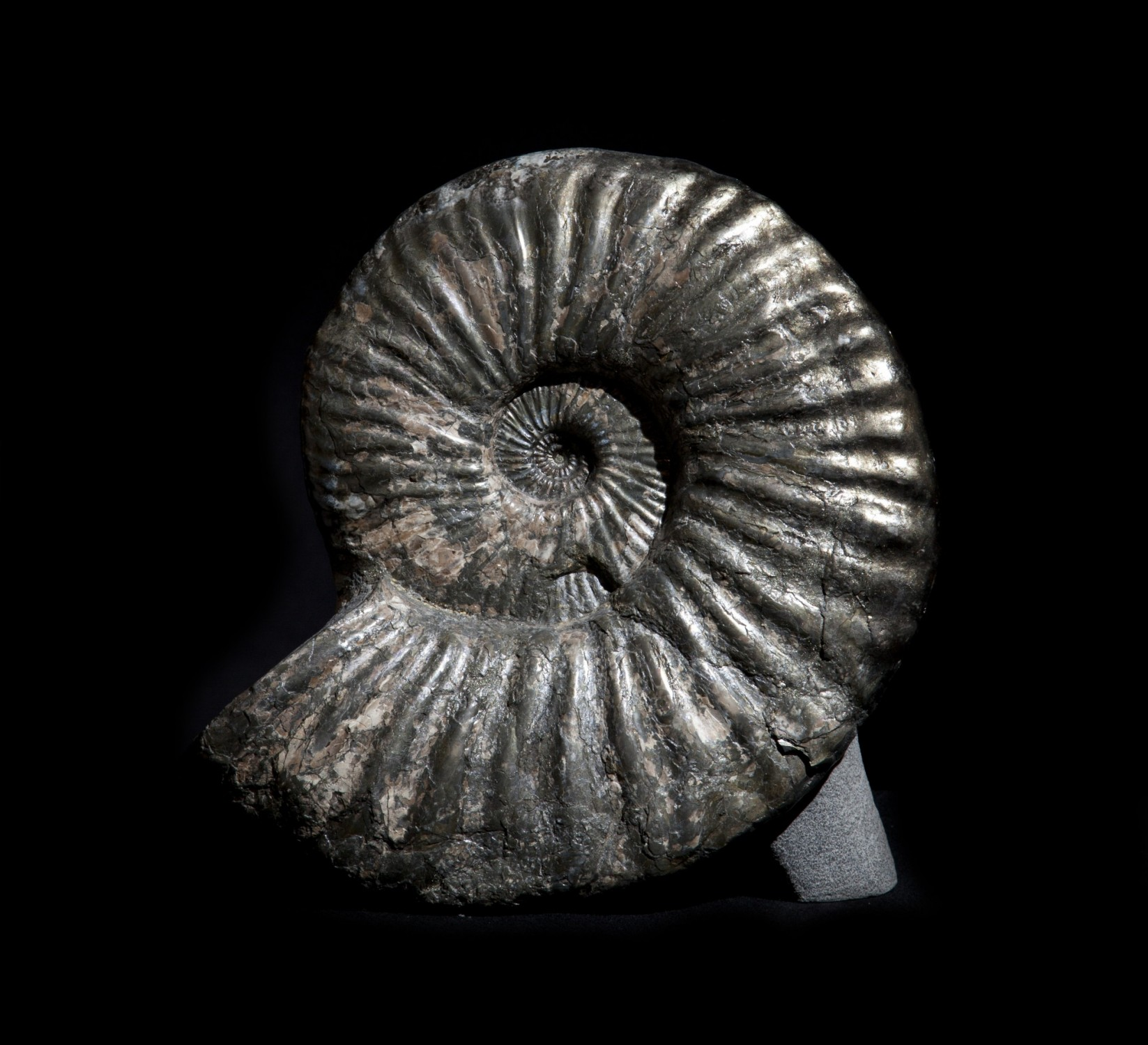 38. Ammonite.1