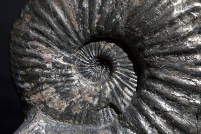 38. Ammonite.4