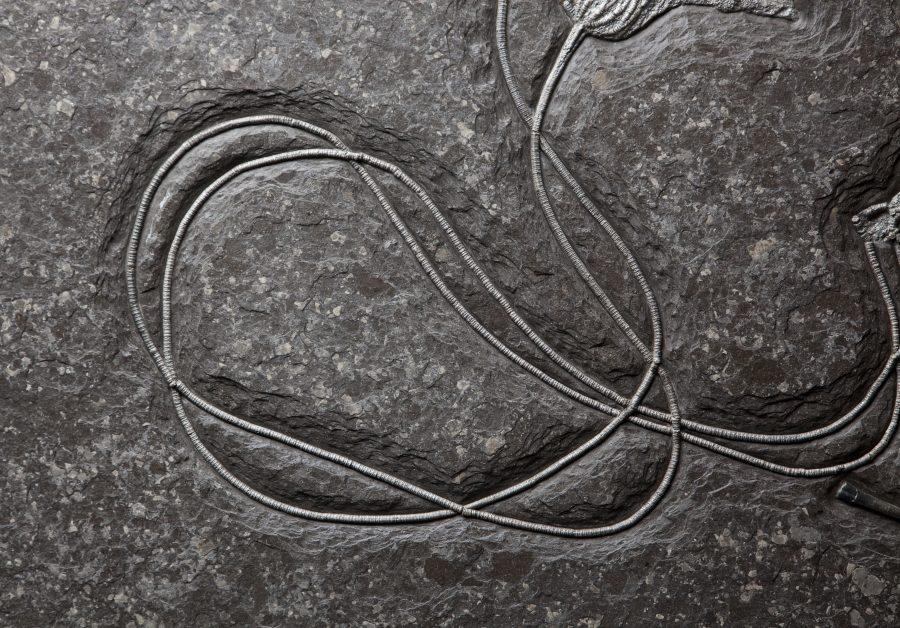 24. Crinoid H91.5 W102.5 D4 .2