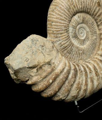 Ammonite Morooco 3. H46 W51 D10 £1,600