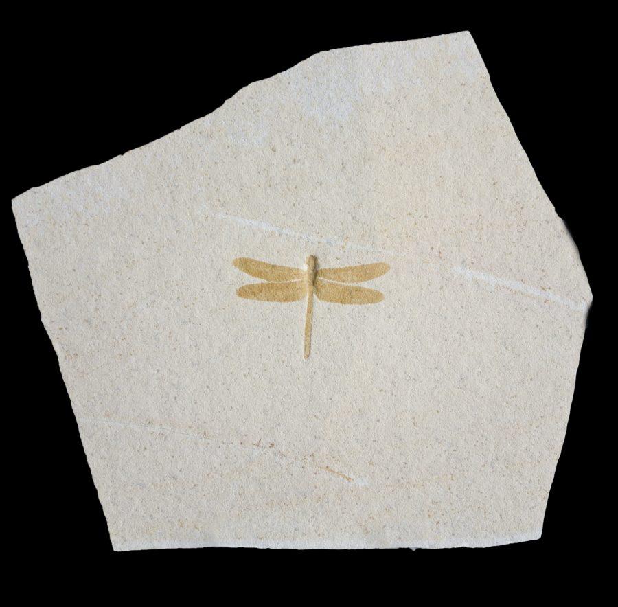 DragonflyPimH35 W37 D1cms £4,600